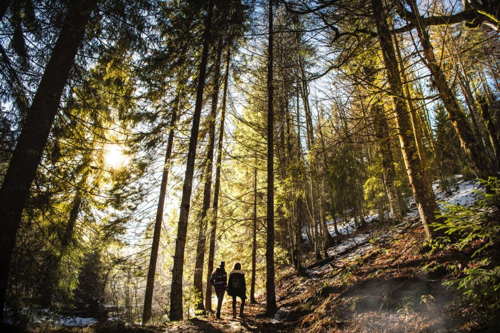 2 people look up at trees in forest